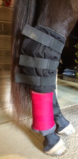Luna wearing a Hock Boot with a Recover Wrap below to help hold it in place.