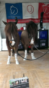 Last year at our booth we had mini horses in our socks!