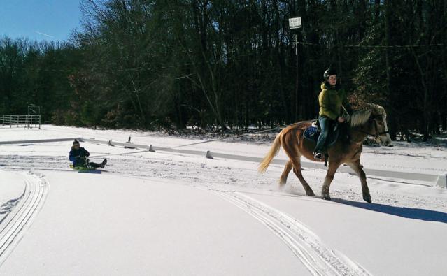 Sledding Pony